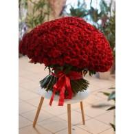 501 красная роза