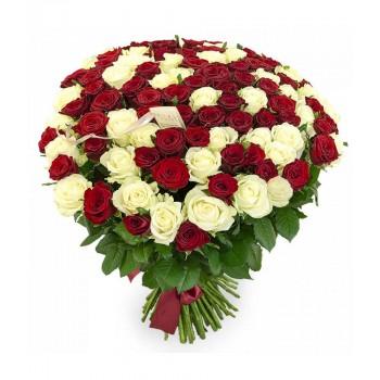 Купить 101 бело-красная роза