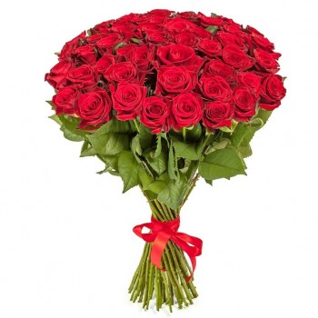 Красная роза Престиж