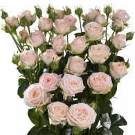 Кустовая пионовидная роза «Бомбастик»