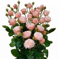 Кустовая пионовидная роза «Мадам Бомбастик»